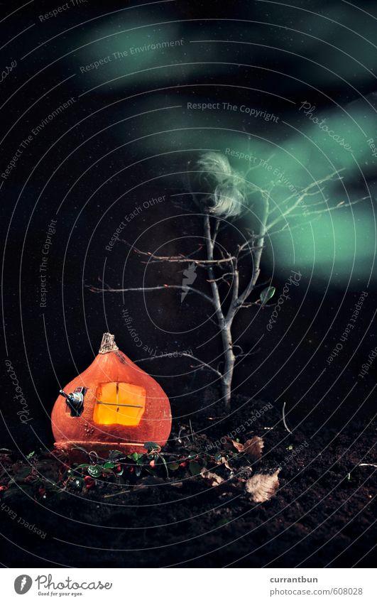 Der Kürbis der Kontemplation Gartenzwerge skurril Kürbisgewächse Kürbisfeld Erde Nacht Halloween Denken Gegenwart Farbfoto Gedeckte Farben Studioaufnahme