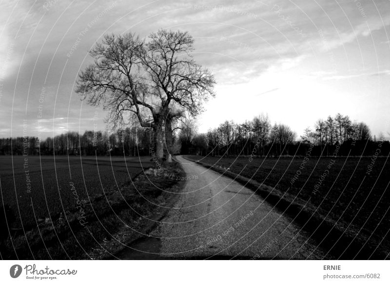 Der weg zum..? Baum Feld Wolken Stimmung Beton unterwegs Wege & Pfade Himmel Zweig Natur Canon EOS 300D Außenaufnahme