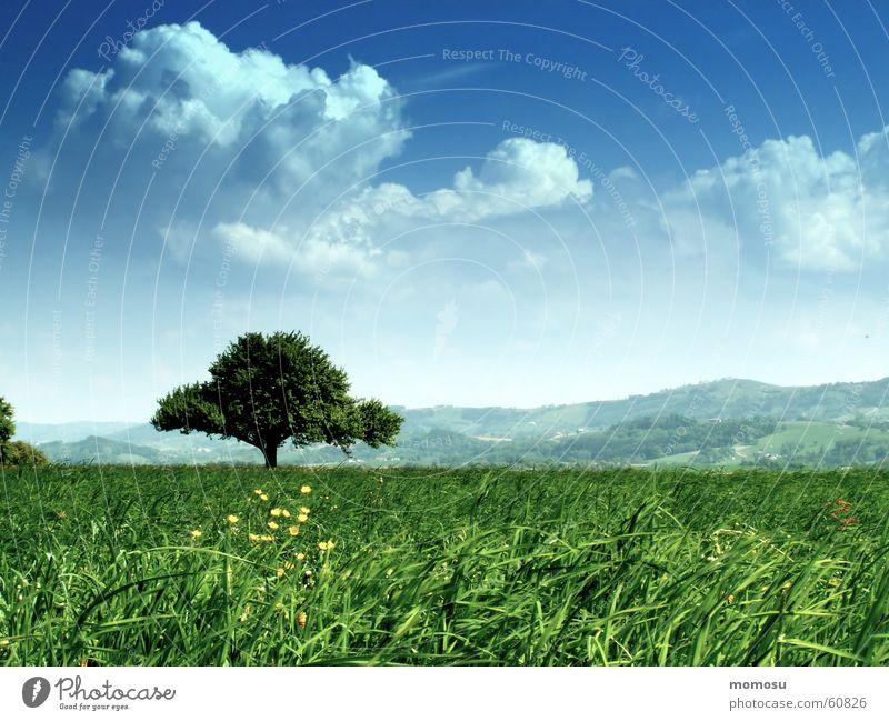 Baum im Grün Himmel Blume Sommer Wolken Wiese Gras Frühling Österreich Jahreszeiten