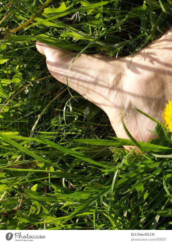 Orthogonaltritt grün Wiese Gras Frühling Fuß Freizeit & Hobby treten Fußtritt