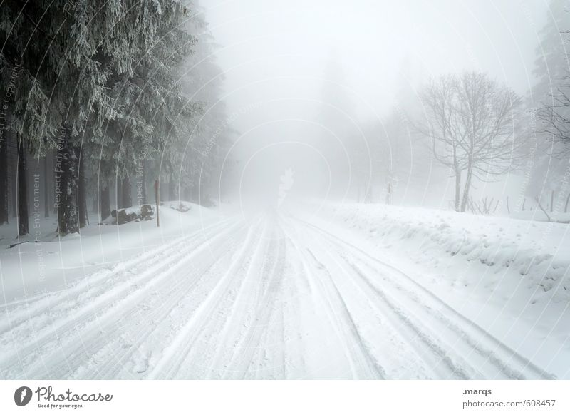 Unwetter Ausflug Abenteuer Winter Schnee Winterurlaub Umwelt Natur Landschaft Urelemente Himmel Horizont Klima Wetter Nebel Baum Verkehr Verkehrswege Straße