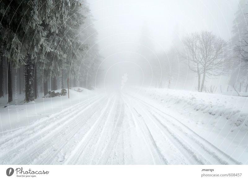 Unwetter Himmel Natur Baum Landschaft Winter kalt Umwelt Straße Schnee Wege & Pfade Horizont Stimmung Wetter Nebel Verkehr Klima