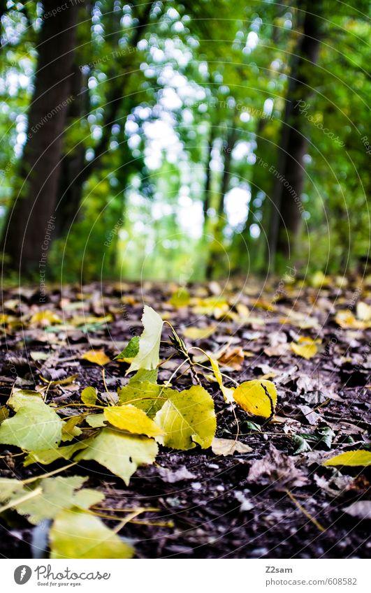 herbst II Umwelt Natur Landschaft Herbst Schönes Wetter Pflanze Baum Sträucher Wald Bach frisch kalt nachhaltig natürlich mehrfarbig grün Idylle Detailaufnahme