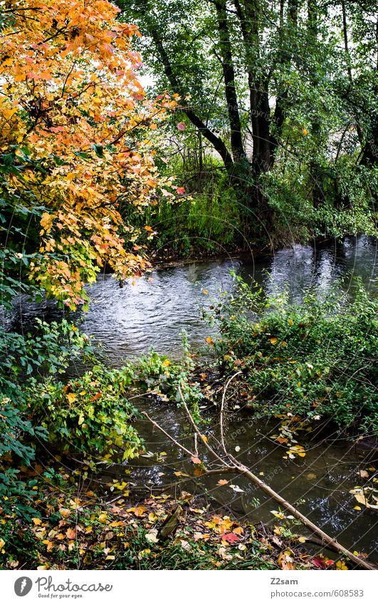 herbst Umwelt Natur Landschaft Herbst Baum Sträucher Wald Bach frisch kalt nachhaltig natürlich mehrfarbig grün Idylle Jahreszeiten Blatt Herbstlaub ruhig
