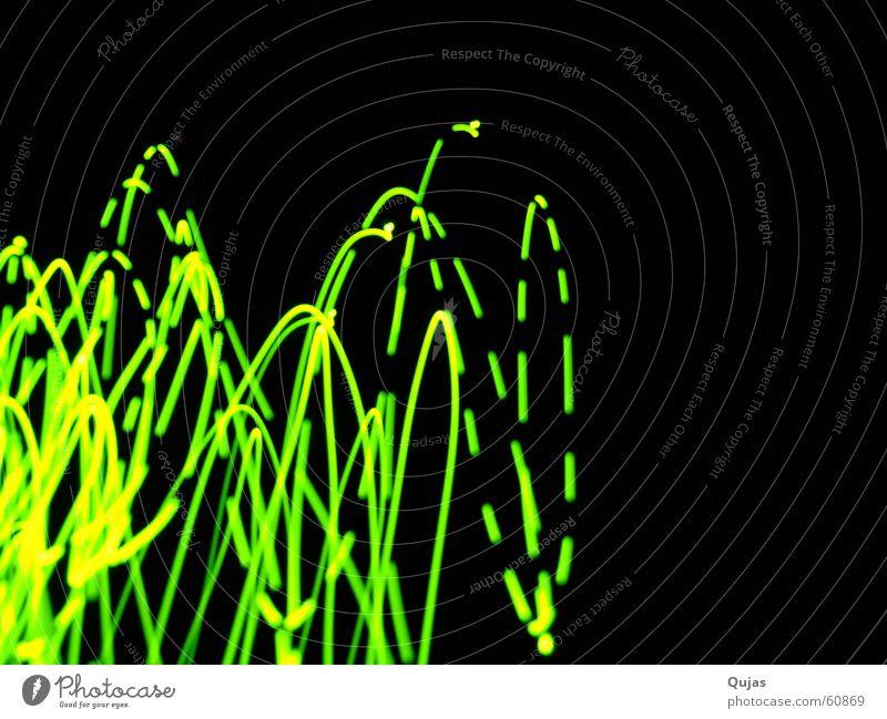 Glühwürmchen??? grün gelb Licht springen Aktion Experiment Neonlicht oben schwingen Spuren glühen Linie Elektrizität Bewegung move moving light
