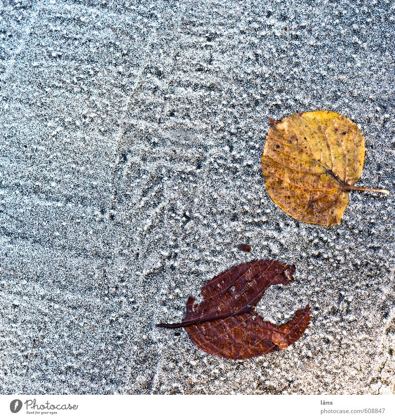pac man < Blatt Straße Herbst Wege & Pfade liegen