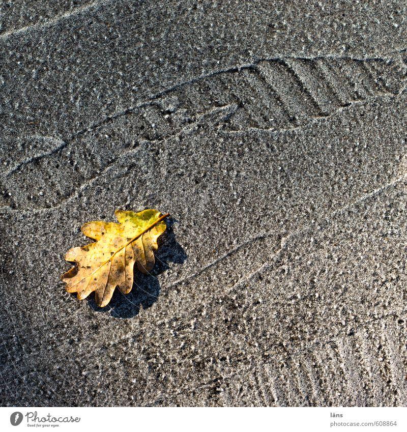 Blattgold Herbst Eichenblatt Verkehrswege Straße Wege & Pfade gelb grau Vergänglichkeit Spuren Asphalt Teer Linie Wandel & Veränderung niedlich Farbfoto