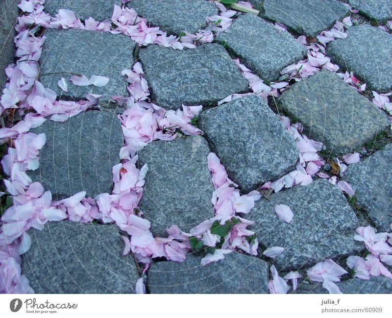 blütenweg Pflanze Straße Blüte Frühling grau Stein Wege & Pfade rosa Pflastersteine