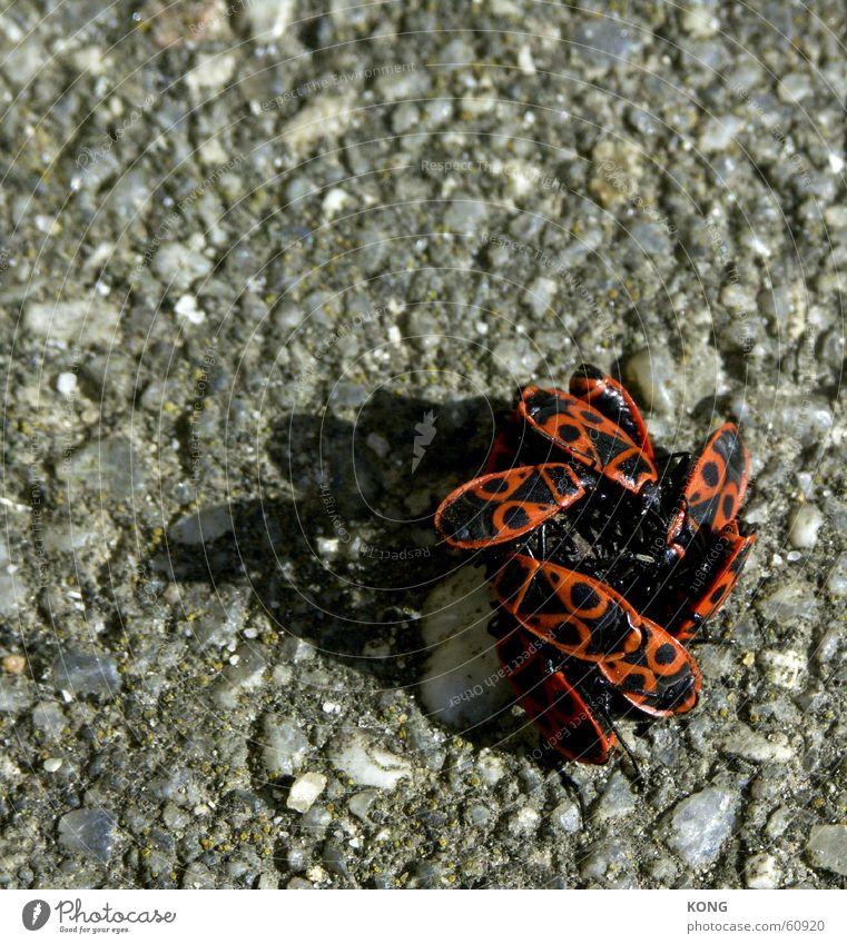 zusammenrottung Zusammensein mehrere Insekt eng Käfer Anhäufung Kuscheln Haufen Schiffsbug Pogo zusammenrotten