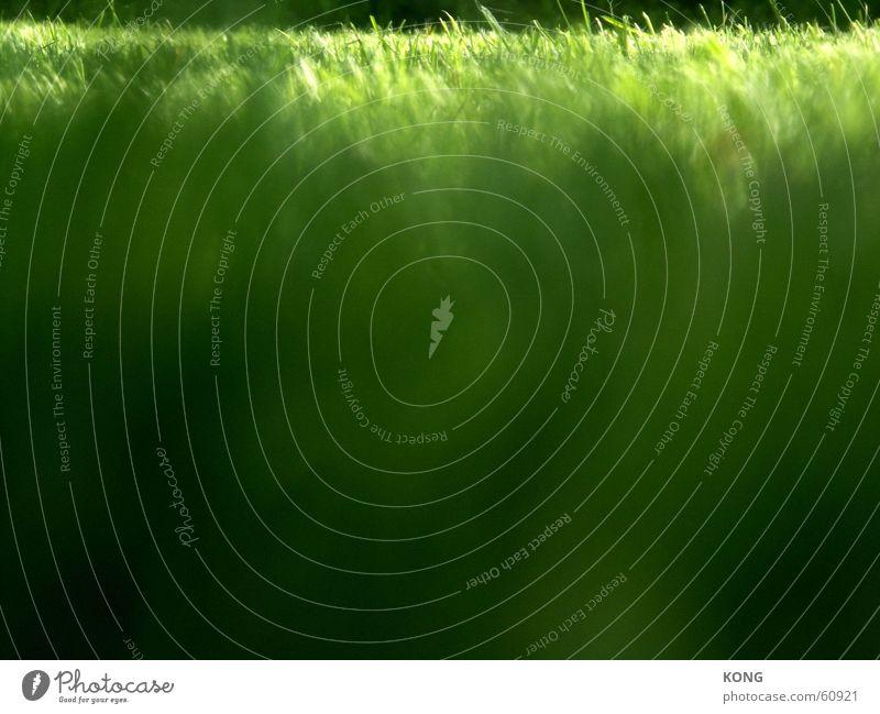 gruenes gras grün Sommer Wiese Gras Frühling Park Rasen Halm Verlauf Liegewiese