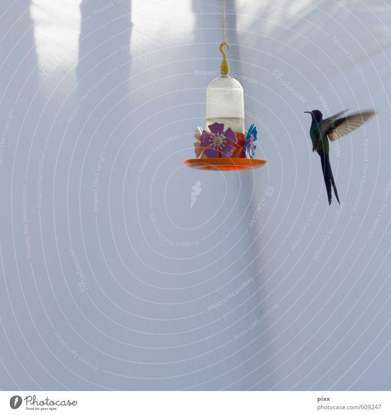 Engel Natur Ferien & Urlaub & Reisen schön grün Sommer Sonne Tier Blüte Garten Vogel fliegen orange Wildtier Tanzen Geschwindigkeit Flügel