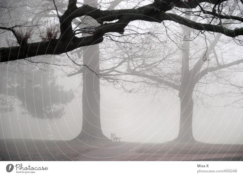 sound of silence Natur Baum Landschaft Winter dunkel kalt Umwelt Traurigkeit Gefühle Herbst Tod grau Stimmung Wetter Park Nebel