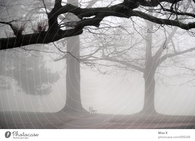 sound of silence Umwelt Natur Landschaft Herbst Winter Wetter schlechtes Wetter Unwetter Nebel Baum Park dunkel kalt trist grau Gefühle Stimmung Traurigkeit