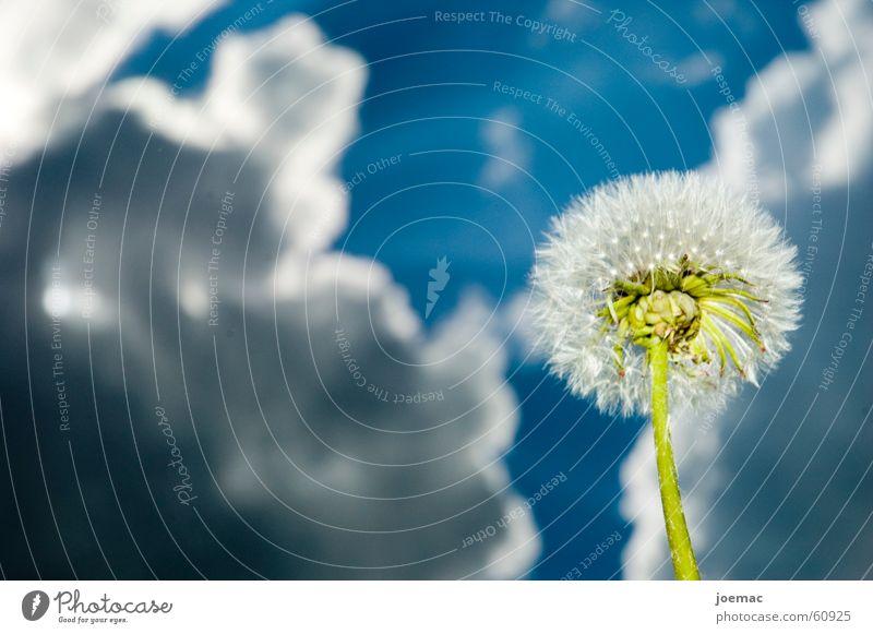 superwetter Wolken Blume Löwenzahn grün Sonnenlicht Unwetter Himmel blau Gewitter