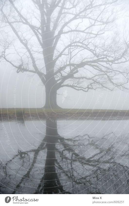sound of silence II Natur Wasser Baum Landschaft Winter kalt Umwelt Traurigkeit Gefühle Herbst Tod grau See Stimmung Wetter Regen