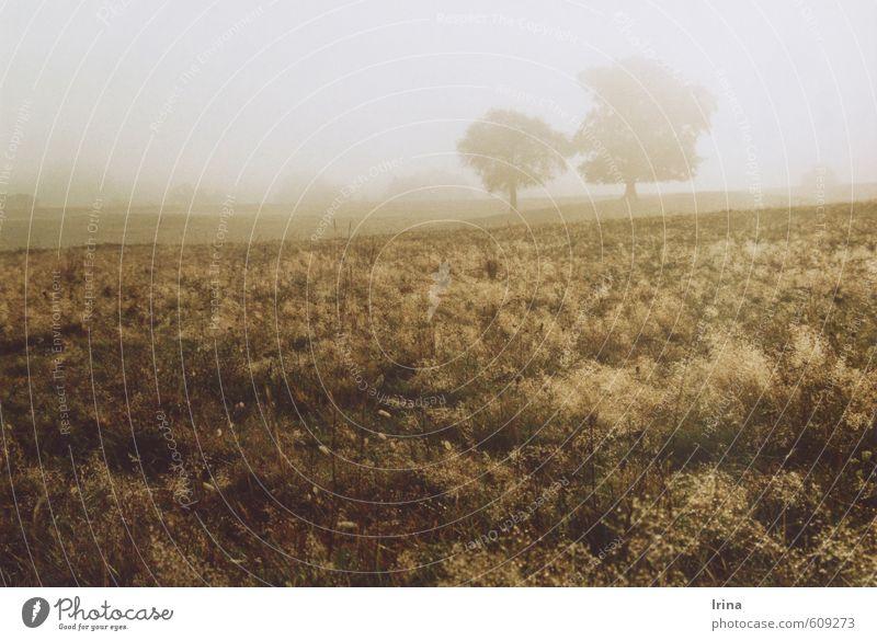 Romanian Rhapsody Natur Baum Erholung Landschaft ruhig Ferne Wiese Herbst grau Freiheit natürlich braun Stimmung Idylle Nebel frei