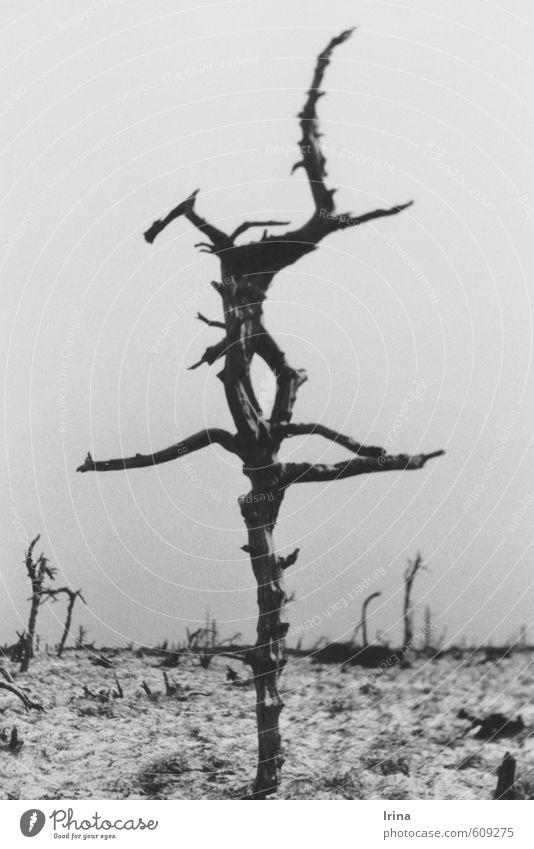 *100* | I'm still standing! Natur Baum Landschaft Einsamkeit Winter Senior Schnee Tod Zeit Vergänglichkeit Trauer Verfall Ende analog bizarr Krieg