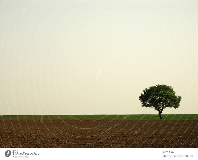 It's my Lieblingsbaum again :-) Baum Feld Frühling Blatt Einsamkeit Niederrhein Himmel Natur karg