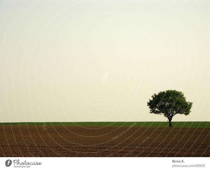 It's my Lieblingsbaum again :-) Natur Himmel Baum Blatt Einsamkeit Frühling Feld karg Niederrhein