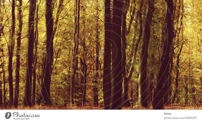 L´Autunno op.8 RV293 Natur Baum Erholung Landschaft ruhig Tier Wald gelb Wärme Herbst Zeit braun Stimmung gold Idylle wandern