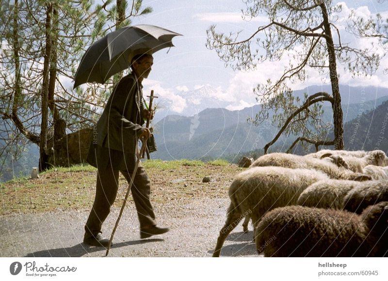 unter Indiens Sonne Mann Schaf Hirte