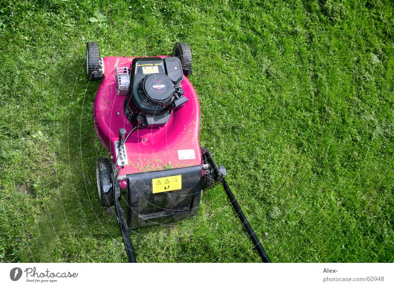 Emanzipation eines Rasenmähers grün Wiese Gras Garten Arbeit & Erwerbstätigkeit rosa dreckig laut Homosexualität Krach Rasenmäher Schwuler