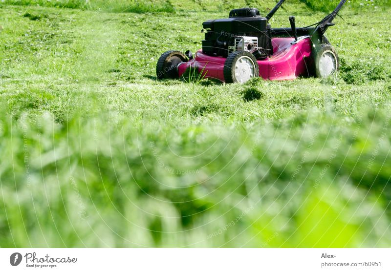 Dem schwulen Rasenmäher auf der Lauer grün Wiese Gras Garten Arbeit & Erwerbstätigkeit rosa dreckig Perspektive Suche beobachten Frosch laut Homosexualität