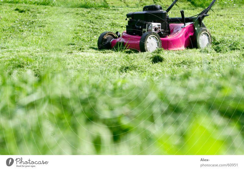 Dem schwulen Rasenmäher auf der Lauer rosa Homosexualität Arbeit & Erwerbstätigkeit Krach laut Gras Wiese grün Suche drimmer Schwuler Garten yarn
