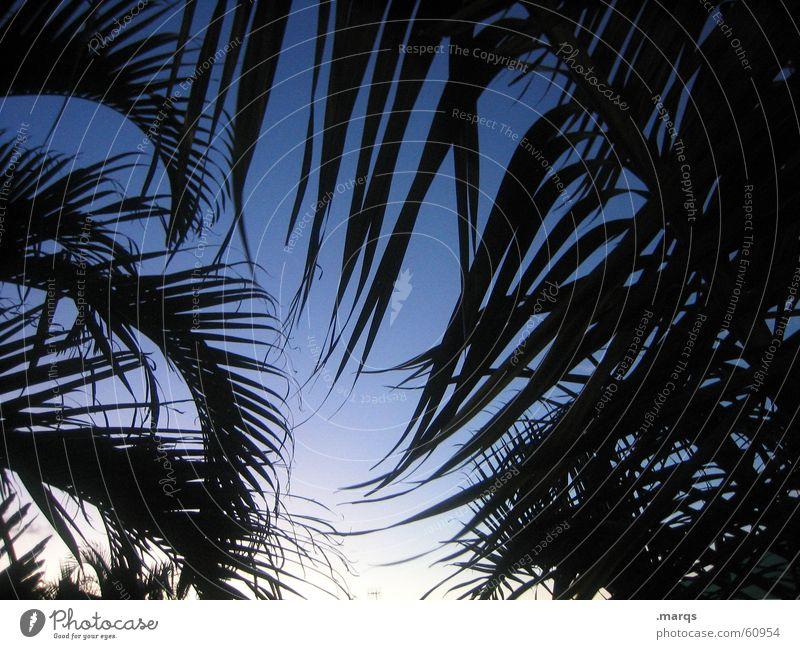 Palmen Lifestyle exotisch Ferien & Urlaub & Reisen Ferne Freiheit Sommer Sommerurlaub Himmel Erholung Farbverlauf Byron Australien Rahmen Blatt Fernweh Paradies
