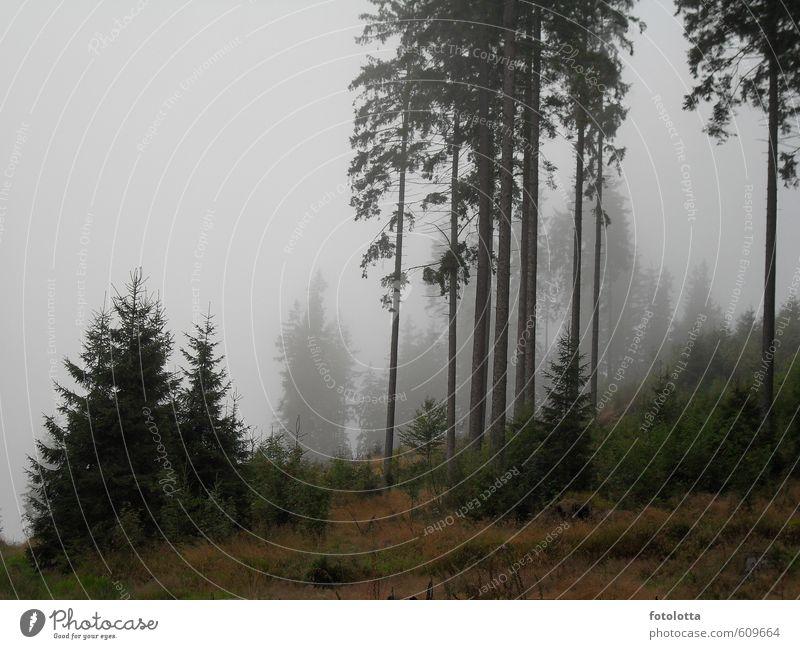 Nebelwald Natur Landschaft Herbst Wetter schlechtes Wetter Baum Sträucher Nadelbäume Wald Berge u. Gebirge Österreich Waldviertel Fußweg Traurigkeit wandern