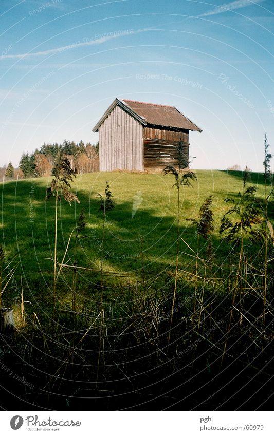 Sigi's Hütte grün Wiese Hügel schilff Himmel Schatten blau