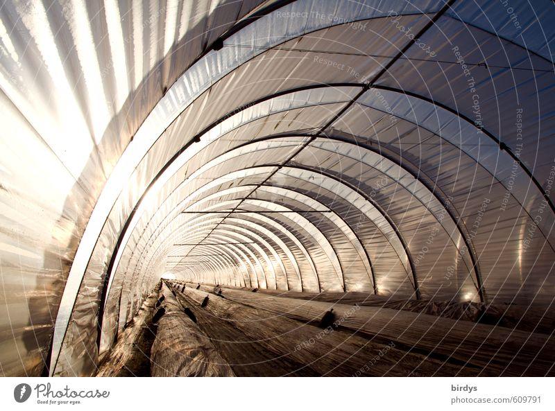 Folientunnel außergewöhnlich hell leuchten modern Perspektive Klima ästhetisch Landwirtschaft tief lang Tunnel Bogen Forstwirtschaft Arbeitsplatz Erdbeeren