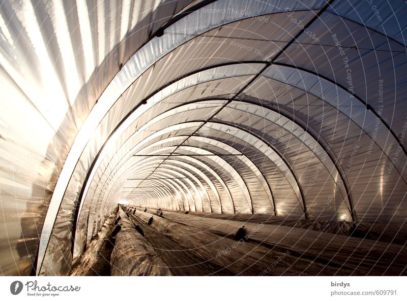 Folientunnel Gärtnerei Arbeitsplatz Landwirtschaft Forstwirtschaft Gewächshaus leuchten ästhetisch außergewöhnlich hell lang Klima modern Perspektive Bogen