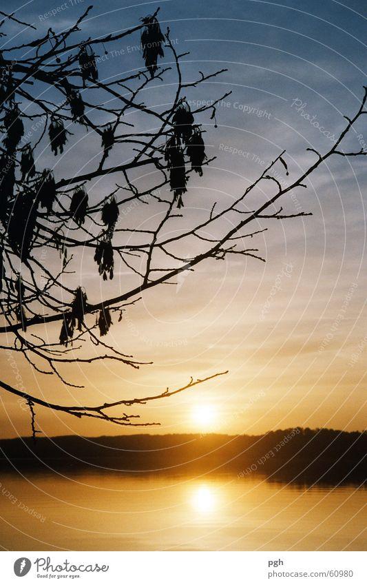 Sonnenuntergang am Starnberger See Stimmung gelb Zweig Wasser blau