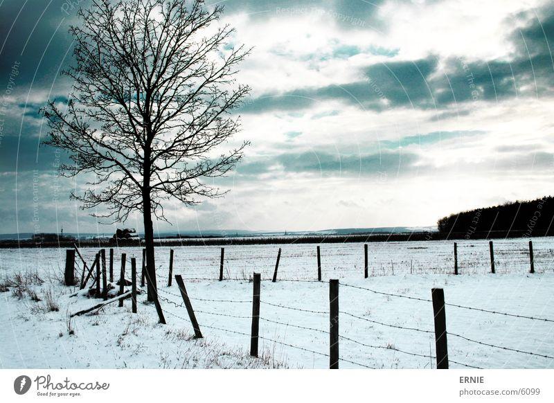 Winterimpression Baum Zaun Holz kalt Wolken Schnee bedecken Natur Landschaft Außenaufnahme