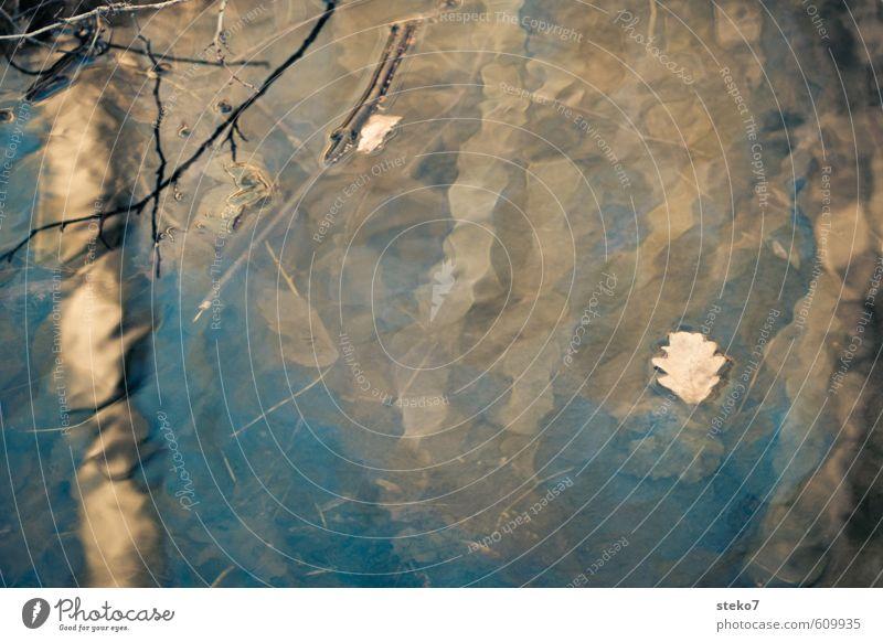 """Blatt im """"flow"""" Natur Wasser Herbst Baum Bach Schwimmen & Baden blau braun Reflexion & Spiegelung Im Wasser treiben Gedeckte Farben Außenaufnahme Muster"""