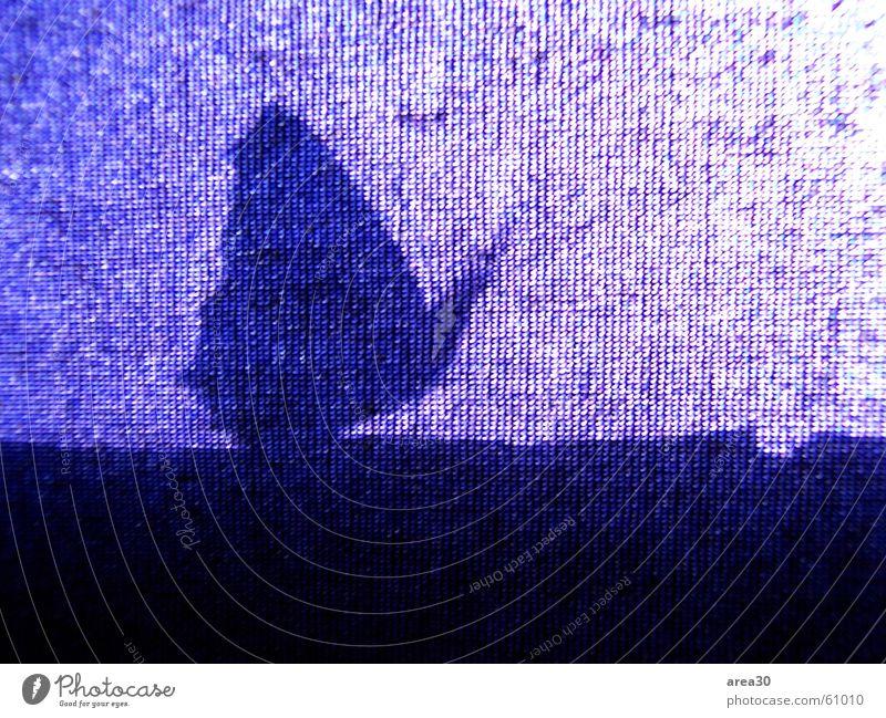 Schmetterling macht blau (Serie) Kleiner Fuchs Silhouette Insekt Tier Gegenlicht heizen Fenster Rollo Jalousie Vorhang Gardine Stoff Flügel schlagen flattern