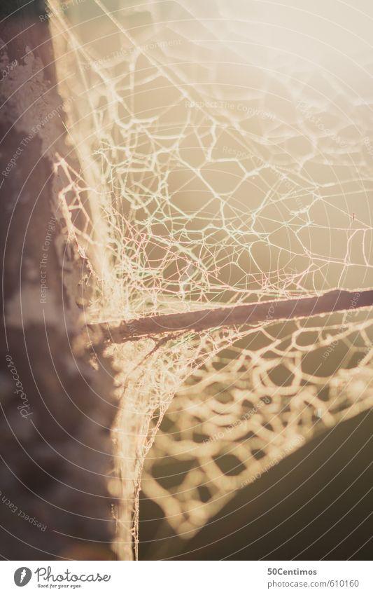 Altes Spinnweben im Sonnenuntergang Spinne Spinnennetz Zaun Holz alt Frieden ruhig Farbfoto Außenaufnahme Nahaufnahme Detailaufnahme Makroaufnahme Tag Licht