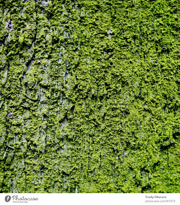 i'm still excited in green grün Holz Moos Material Holzbrett Schalen & Schüsseln Oberfläche Baumrinde
