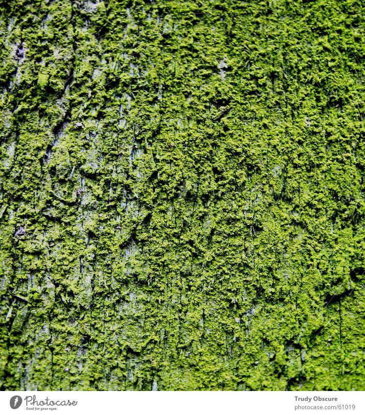 i'm still excited in green Oberfläche Material Holz Baumrinde Holzbrett grün Schalen & Schüsseln Strukturen & Formen vom baum brennmaterial Moos Idee
