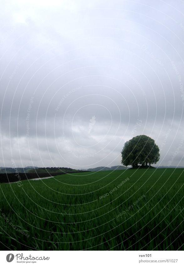 kein schoenwetter foto Baum Wolken Blatt Baumstamm Feld Wiese grau tree cloud clouds gün blau Regen raining Niederschlag Pflanze lanschaft landscape