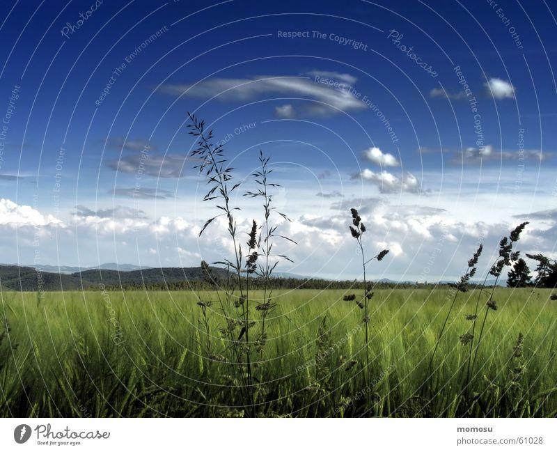 Abendwiese Wiese Feld Wolken Frühling Sommer Gras Licht Himmel Schatten Landschaft