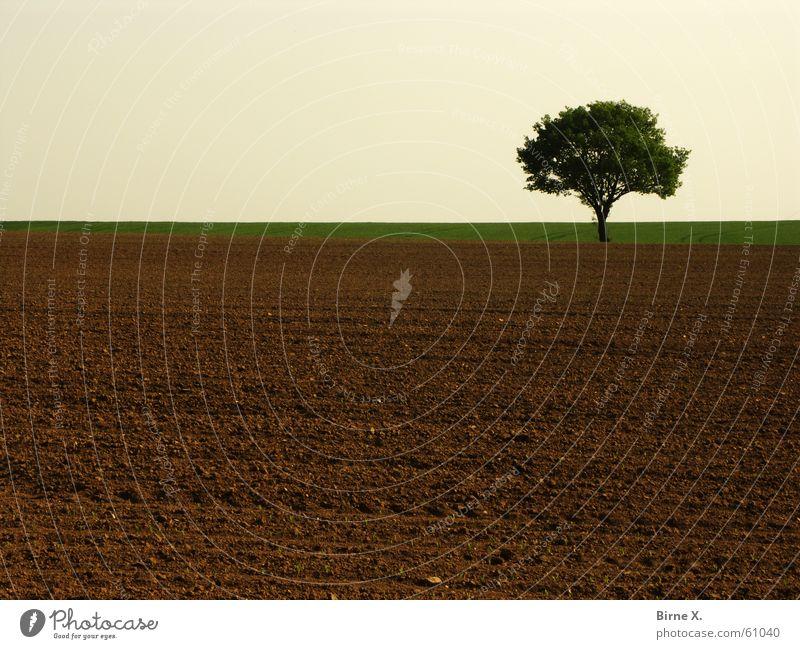 Einsamer Baum 2 Feld Einsamkeit Niederrhein Natur Himmel Erde