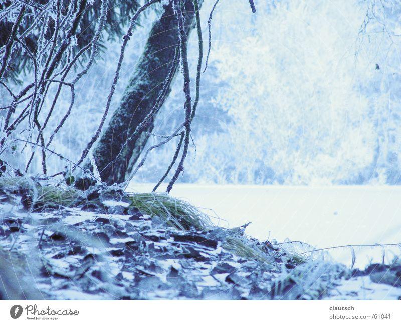 wintergedicht Wasser Baum blau Winter ruhig Wald kalt Wiese See Landschaft Eis Frost Bodenbelag Idylle gefroren frieren