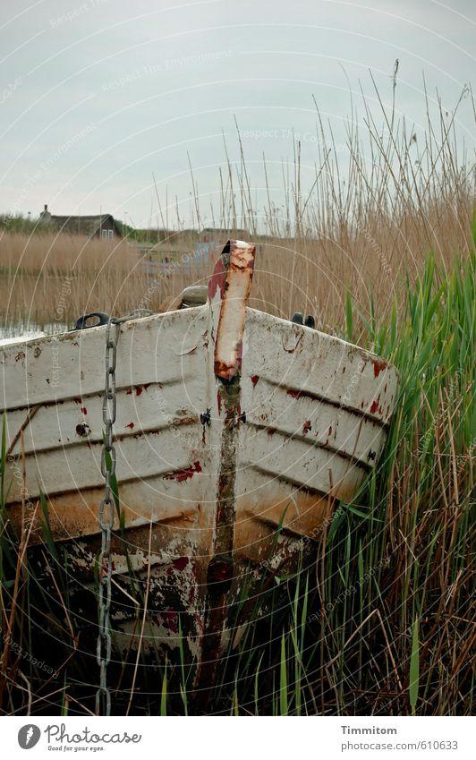 Bereitschaftsdienst. Ferien & Urlaub & Reisen Natur Himmel Sommer Schönes Wetter Pflanze Gras Dänemark Hütte Ruderboot Ankerkette Holz Metall warten natürlich
