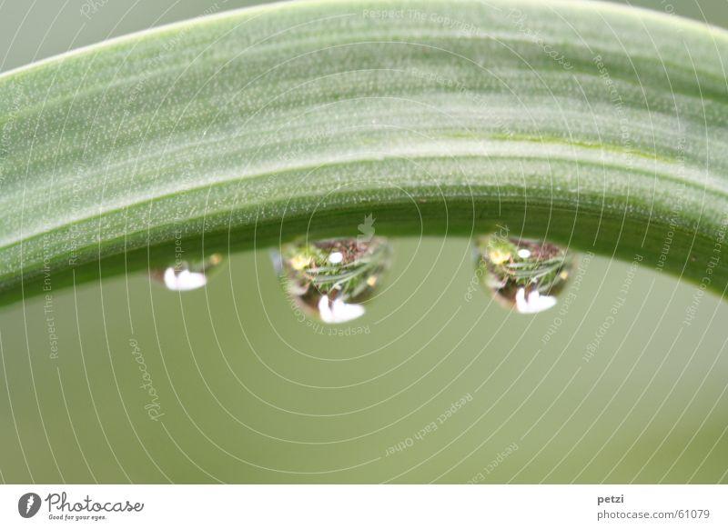 Tropfenspiegel Blume grün Pflanze Blatt Regen 2 klein Wassertropfen groß durchsichtig Glätte gekrümmt