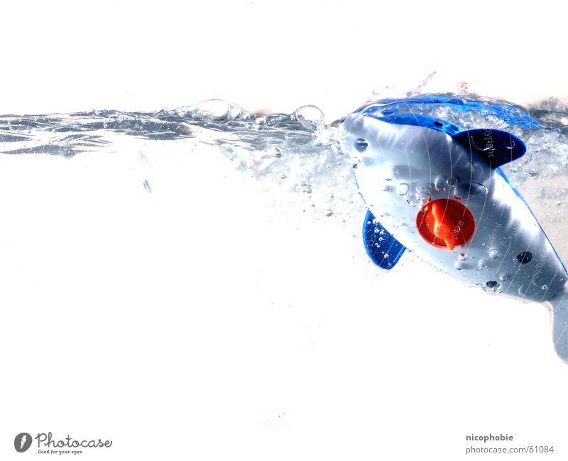 Flipper is in the House Wasser blau rot Freude springen Spielen Fisch tauchen Spielzeug Sturm Aquarium Säugetier Schwimmhilfe Delphine Wal auftauchen