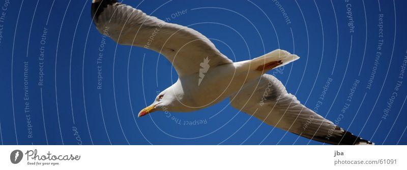 Flieg Delfin, Flieg! Möwe Delphine Spannweite Schnabel Schwanz schwarz weiß fliegen Luftverkehr Flügel Auge Himmel blau