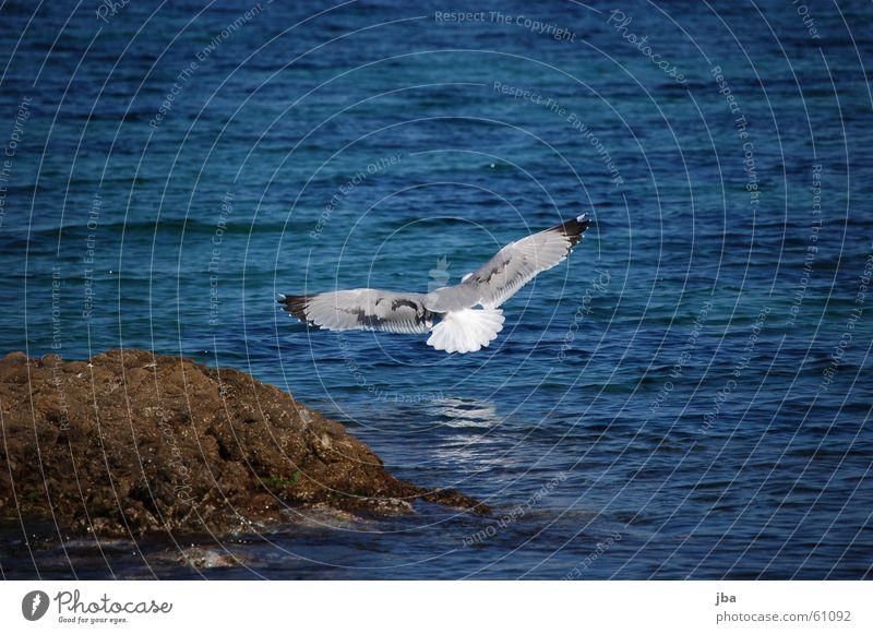 Abflug! Möwe Meer Reflexion & Spiegelung Ferne Tier Spannweite Schnabel Schwanz schwarz weiß fliegen Luftverkehr Flügel Stein Wasser Auge Himmel blau