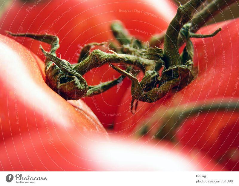 makro machts - dem pc-style auf der spur rot Kochen & Garen & Backen Vergänglichkeit Gemüse reif Tomate Strauchtomate